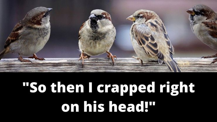 _So then I took a shit right on his head! (1)